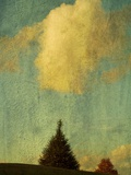 A Pine Tree Pointing Toward a Cloud Photographic Print by Susan Bein