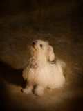 Daisy the Cute Dog Photographic Print by Susan Bein