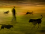 A Man Walking with Four Dogs Photographic Print by Susan Bein
