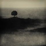 A Tree, a Cross and an Animal on a Small Piece of Land by the Sea Photographic Print by Marco Diaz