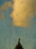 A Pine Tree and a Cloud Photographic Print by Susan Bein