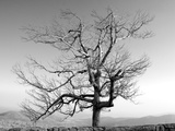 A Tree in a Bleak Location Photographic Print by Rip Smith