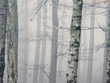 Silver Fog Photographic Print by David Baker
