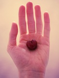 Single Heart-Shaped Cherry in Palm of Hand Photographic Print by Jena Ardell