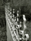 An Iron Railing Photographic Print by Katrin Adam