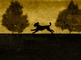 A Dog Running Between Two Small Trees Photographic Print by Susan Bein