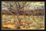 Apricot Trees in Blossom Prints by Vincent van Gogh