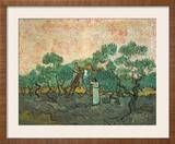 The Olive Pickers, Saint-Remy, 1889 Framed Giclee Print by Vincent van Gogh