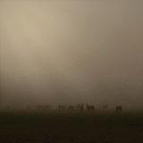 Foggy Morning Photographic Print by Peter Polter