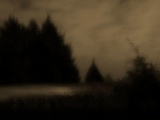 A Night Scene with Pine Trees Photographic Print by Susan Bein