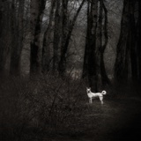 A Medium Size Dog Standing in the Woods Photographic Print by Susan Bein