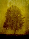 A Tree Standing on a Textured Yellow Background Photographic Print by Susan Bein