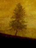 A Lonesome Tree Photographic Print by Susan Bein