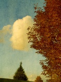 Delicate Leaves on a Tree with a Small Cloud Photographic Print by Susan Bein
