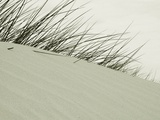 Long Grass on Sand Dunes Photographic Print by Katrin Adam