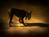 A Small Dog Standing with its Shadow Photographic Print by Susan Bein