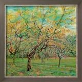 Verger Avec Pruniers En Fleurs Art by Vincent van Gogh