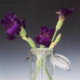 Garden Flowers Photographic Print by Bernard Jaubert