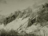 Wind Blown Seagrass on a Beach Photographic Print by Katrin Adam