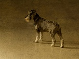A Small Dog Waiting Photographic Print by Susan Bein
