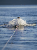 Water Skiier in Action Photographic Print