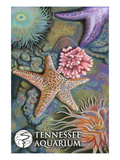 Tennessee Aquarium - Tide Pool Prints by Lantern Press