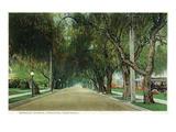 Pasadena, California - View Down Marengo Avenue Posters by  Lantern Press