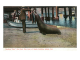 Santa Catalina Island, California - Feeding Scene of Ben the Giant Sea Lion Lámina por Lantern Press