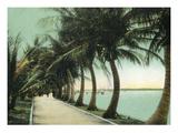 Palm Beach, Florida - Palm Walk Along Lake Worth Kunstdruck von  Lantern Press