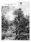 Florida - Scenic View on Ocklawaha River Prints by  Lantern Press