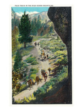 California - View of a Pack Train in the Sierra Mountains Stampa di  Lantern Press