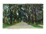 Deland, Florida - View Down Minnesota Avenue Art by  Lantern Press
