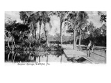 Tampa, Florida - View of Sulphur Springs Prints by  Lantern Press