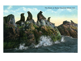 Santa Catalina Island, California - View of Seals on the Rocks Poster por Lantern Press
