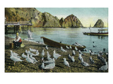Santa Catalina Island, California - View of Sea Gulls at Avalon Prints by  Lantern Press