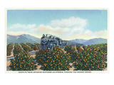 California - Santa Fe Train Passing Through Orange Groves Prints by  Lantern Press