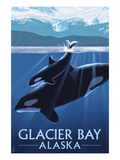 Glacier Bay, Alaska - Orca and Calf Affiches par Lantern Press