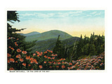 Blue Ridge Mountains, North Carolina - Mount Mitchelll Scene Art by Lantern Press