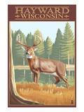 Hayward, Wisconsin - White Tailed Deer Poster by  Lantern Press