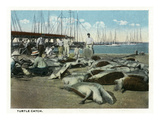 Key West, Florida - View of a Turtle Catch Posters by Lantern Press 