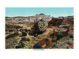 Grand Canyon Nat'l Park, Arizona - Petrified Forest Scene Prints by Lantern Press