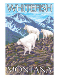Whitefish, Montana - Mountain Goat Family Prints by  Lantern Press