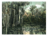Florida - View of Pond Lilies and Hanging Moss Prints by  Lantern Press