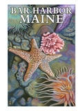 Bar Harbor, Maine - Tidepool Scene Prints by  Lantern Press