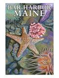 Bar Harbor, Maine - Tidepool Scene Prints by  Lantern Press