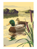 Mallard Ducks Posters by  Lantern Press