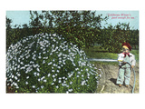 California - Little Boy Watering Flowers, California Winter Good Enough Posters by  Lantern Press