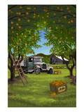 Orange Orchard Scene Prints by  Lantern Press