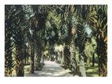 Tampa, Florida - View of Palmetto Walk Poster by  Lantern Press