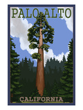 Palo Alto, California - California Redwoods Láminas por  Lantern Press
